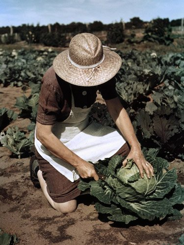 Virginia Norris with homegrown cabbage, one of the many vegetables which the homesteaders grow in abundance. © Debbie Grossman