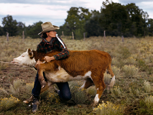 Ruth Leonard secures a calf in her pasture. © Debbie Grossman