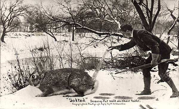 "William H Martin. ""'Salted.' So easy. Put salt on their tails."" Silver Print postcard, 3.5 x 5.5 inches, 1909"