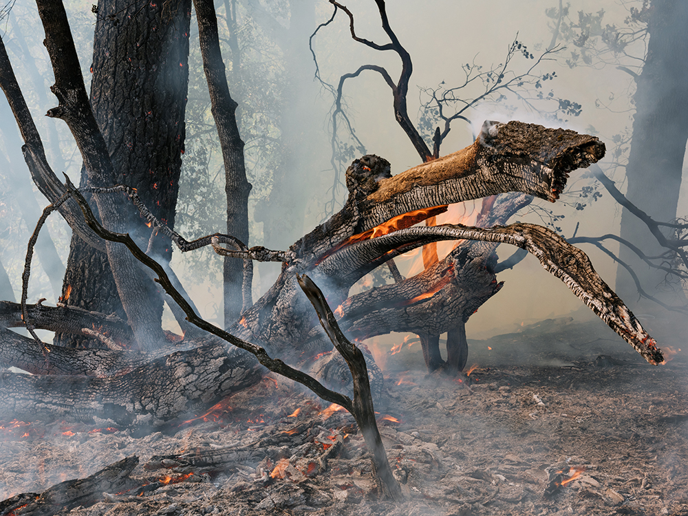 Wildfire, California 2015. © Lucas Foglia and courtesy Fredericks & Freiser Gallery, New York.